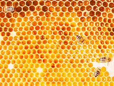 """In addition to honey, bees produce a variety of other substances including propolis, bee pollen and royal jelly. Propolis is derived from tree and plant resin and used by bees to seal and sterilize their hive. It is rich in vitamins, minerals, antioxidants, phytonutrients and flavonoids. To make what is known as """"bee pollen"""", bees collect pollen from flowers and take it back to their hives where it is mixed with honey and traces of propolis, and then fed to larvae for their growth and…"""