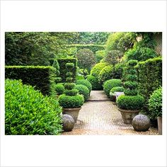 Brick path in formal garden with clipped Buxus shrubs in pots