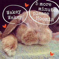 After A Busy #Bunny Day We're All Hopped Out #Cute #SleepingBunny