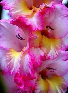 Shade Garden Flowers And Decor Ideas Gladiolus - Love Them Love The Pinks In The Flowers Exotic Flowers, Flowers Nature, Amazing Flowers, My Flower, Beautiful Flowers, Flower Blossom, Pink Flowers, Gladiolus Flower, My Secret Garden