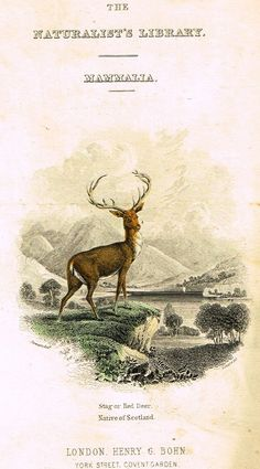 """Jardine's Animals - """"FRONTISPIECE - STAG OR RED DEER"""" - Hand-Colored Engraving - 1833"""
