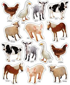 Farm Animals Photographic Window Cling Informations About Farm Animals Photographic Window Cling Pin Book Activities, Preschool Activities, Baby Animal Names, Animal Cutouts, Dinosaur Coloring Pages, Farm Animal Birthday, Carson Dellosa, Farm Party, Barnyard Party