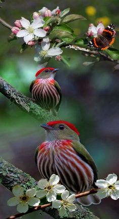 5 pictures mix in to a single imageLike it Kinds Of Birds, All Birds, Cute Birds, Pretty Birds, Little Birds, Angry Birds, Exotic Birds, Colorful Birds, Exotic Pets