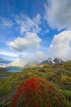 Cuernos del Paine peaks with red blossoms in morning light, Torres del Paine National Park, Patagonia, Chile