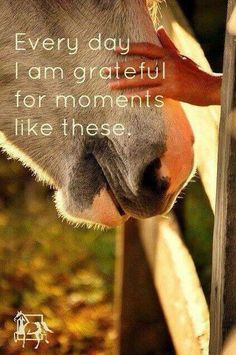 """Every day I am grateful for moments like these."" #EquestrianQuote"