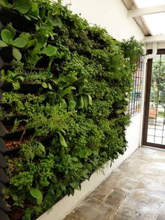 Jardim Vertical Canguru | Ecotelhado
