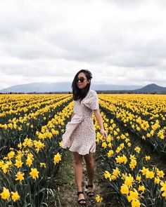 it's a shame the sun wasn't awake to see the flowers too Daffodil Fields- La Conner- in bloom in March. Breathtaking!