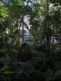 Jardin des Plantes, Paris, Grande serre des forêts tropicales