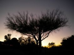Taken in Tucson, AZ 2011
