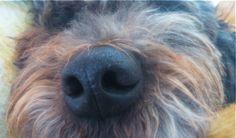 Lola's nose