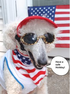 July 4th safety tips from a poodle's point of view from @carmapoodale