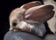 Long eared jerboa ???