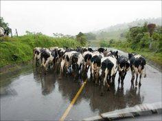 Vermont rush hour :-)