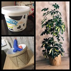 Wicker Flower Pot-Hasır Saksı Making of wicker flower pots from milk bucket. Wicker Flower Pot-H Diy Flowers, Flower Pots, Wedding Hall Decorations, Recycle Plastic Bottles, Succulents Diy, Sustainable Design, Wicker, Diy Home Decor, Diy And Crafts