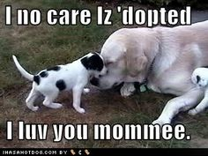 Page 1417 of 1491 - Funny pictures and memes of dogs doing and implying things. If you thought you couldn't possible love dogs anymore, this might prove you wrong. Dog Meds, Meds For Dogs, Dog Cartoons, Cartoon Dog, Hot Dogs, Funny Animals, Funny Pictures, Memes, Fanny Pics