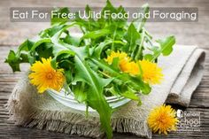Eat For Free: Wild Food and Foraging