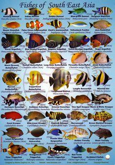 Species Thailand