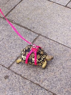 turtle safety comes first.