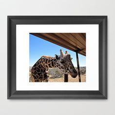 Giraffe Framed Art Print by Rachel Winkelman - $32.00