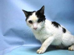 LANCE - A1052636 - Brooklyn - Publicly Adoptable ***TO BE DESTROYED 09/27/15*** As much as one tries,its hard to believe that some people are even allowed to keep animals! 7 year old LANCE,was surrendered due to personal problems. His former owner, had received him back in 2007. The only thing that seems right is that LANCE has been NEUTERED. Other than that,he came into the Care Center, unkempt,dirty and un-cut nails. He had been socialized around kids from 5-9 but unknown towards animals…