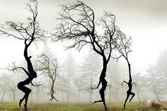 In The Mist by Igor Zenin