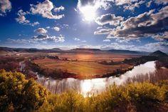 El viñedo: Viña Lanciano, Rioja, Spain