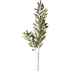 OKA Faux Olive Stem (€12) ❤ liked on Polyvore featuring home, home decor, floral decor, plants, fillers, flowers, backgrounds, flores, green y green silk flowers
