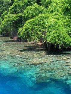 ✯ Kimbe Island, Papua New Guinea