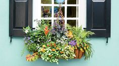 Beautiful gardens in miniature—that's the essential appeal of window boxes. Here, three examples of beautiful, brightly colored window boxes. Window Box Flowers, Window Boxes, Flower Boxes, Eco Friendly Environment, Green Environment, Design Food, Box Design, Design Ideas, Boxwood Landscaping