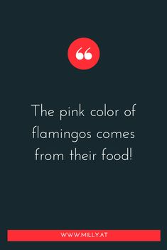 """Who would have thought??""""You are what you eat!"""" has never been as accurate as when you look at #flamingos!⠀⠀⠀⠀⠀⠀⠀⠀⠀ As you may know I have a very hearty and special relationship with  flamingos! But I was very surprised to learn that the colour of their #plumage actually comes from their #food! Science Facts, Food Science, Food Chemistry, I Feel Overwhelmed, Blog Categories, Fusion Food, Melting Pot, Biochemistry, What You Eat"""