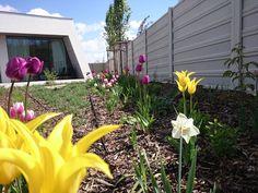Počas jarných mesiacov krásne vyniknú tulipány a narcisy v záhonov. Rodinná záhrada v Galante. Plants, Plant, Planets