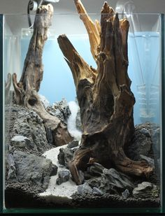 driftwood aquascaping - Google Search
