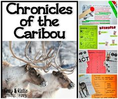 Reindeer, or Caribou, are interesting animals to research. Students complete fun activities on what they learn.