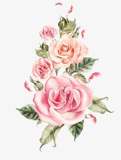 Hand-painted pink roses bouquet, Hand Painted, Watercolor, Hand-painted Floral Material PNG Image and Clipart Acrylic Painting Flowers, Watercolor Flowers, Watercolor Paintings, Bunch Of Flowers, Colorful Flowers, Pink Rose Bouquet, Pink Roses, Flowery Wallpaper, Romantic Roses