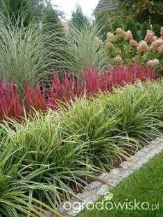 Image result for ornamental grass border design
