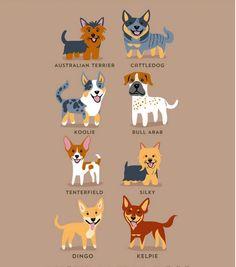 Perros Australianos