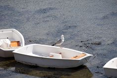 Boat, Gull, Bird, Seagull, Animal, Sea #boat, #gull, #bird, #seagull, #animal, #sea