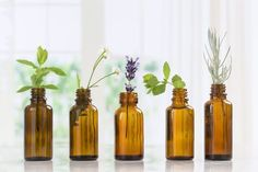 Essential oils are used as natural remedies for various conditions and to improve the health of skin, hair and body. Learn about the top essential oil uses and essential oil benefits. Essential Oil Safety, Essential Oils For Colds, Essential Oil Uses, Home Remedies, Natural Remedies, Herbal Remedies, Eucalyptus Citronné, Elixir Floral, Oils For Sinus