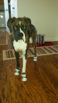 11 Best Dog Sneakers - Polka Dots   Flowers images  e99a0d9455be