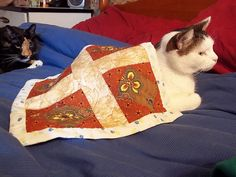Cat Quilt                                                                        This kitty seems to love her quilt, great picture.