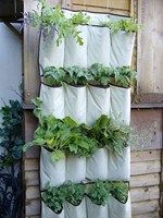 Possibly the cheapest and easiest gardening idea we've seen yet...re-purpose an old shoe organizer!