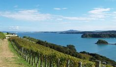 Waiheke Island, with Rangitoto in the background Waiheke Island, South Island, Auckland, Maui, New Zealand, The Good Place, Vineyard, Scenery, Around The Worlds