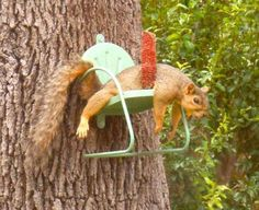 Ten Awesome And Fun Squirrel Feeders - I Can Has Cheezburger? Animals And Pets, Baby Animals, Funny Animals, Cute Animals, Wild Animals, Squirrel Feeder, Cute Squirrel, Squirrels, Bird Feeders