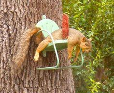 Squirrel Feeder Diy, Cute Squirrel, Baby Squirrel, Squirrels, Bird Feeders, Cute Baby Animals, Animals And Pets, Funny Animals, Wild Animals