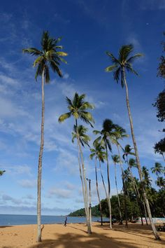#Cayenne #Guyane #tournage #ArthurAutourDuMonde #découverte #voyage #plage #cocotier #crabe