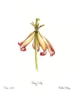 Kristen Johns: A fading tulip...