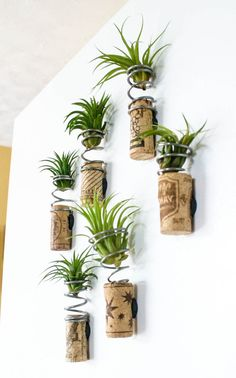 Tillandsia Splagnets Air Plant Recycled Spring By Eclectikinetic