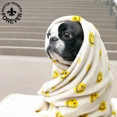 """Learn additional info on """"boston terrier puppies"""". Take a look at our web site. Terrier Breeds, Terrier Puppies, Boston Terrier Temperament, Boston Terrier Love, Boston Terriers, Bull Terriers, English Terrier, American Bull, Best Dogs"""