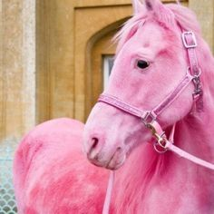 Now I know that somebody made this horse pink on the computer, but I like it because I like horses and my favorite color is PINK!
