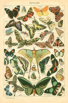 greenpaper.typepad.com photos free_downloads french-deco-alpha-book-papillons.jpg